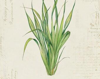 "Vintage Botanical Plant ""Green Leaves"" on French Ephemera Print 8x10 P117"