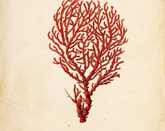 Vintage Sea Coral Print 8x10 P126
