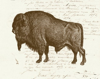 Vintage Bison Buffalo on French Ephemera Print 8x10 P140