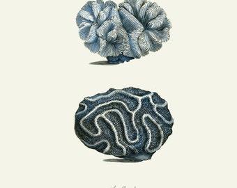 Vintage Sea Coral Print 8x10 P107