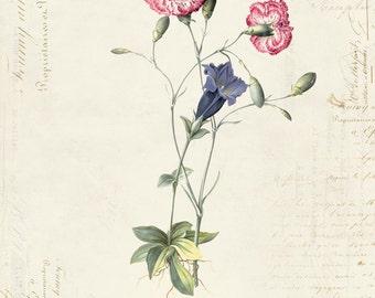 "Vintage Botanical Flowers ""Gentian Carnation"" on French Ephemera Print 8x10 P169"