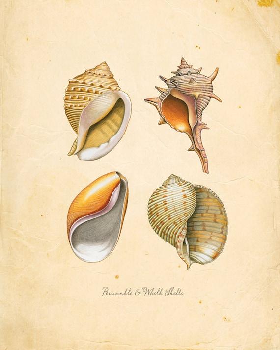 Vintage Sea Periwinkle & Whelk Shells on Antique Ephemera Print 8x10 P119