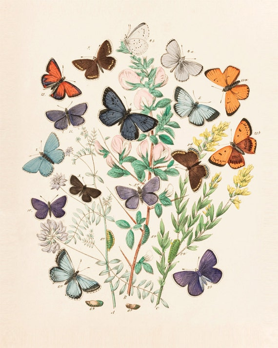 Vintage Butterfies & Flowers Print 8x10 P146