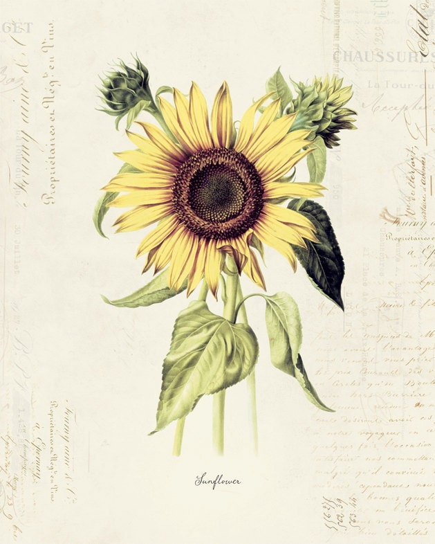 Vintage Sunflower 20
