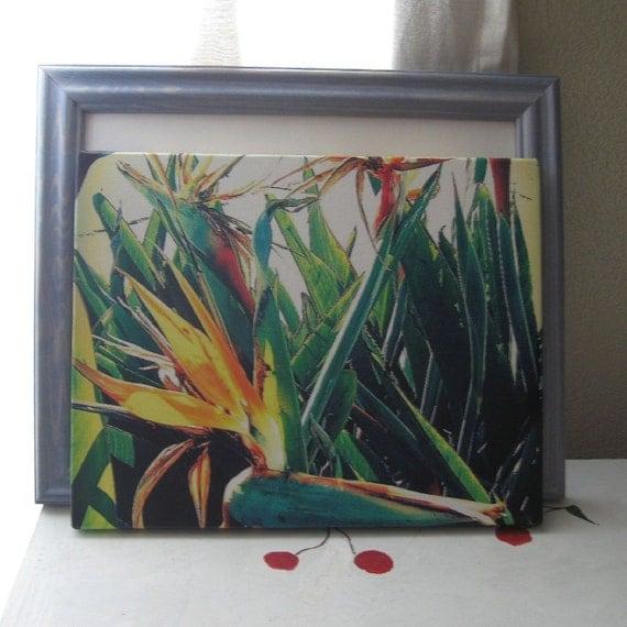 "CANVAS PRINT FLORAL Tropical ""Birds of Paradise"" 11x14"