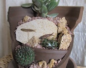 Upcycled Broken Pot Fossil Fish Cactus/ Succulent Garden