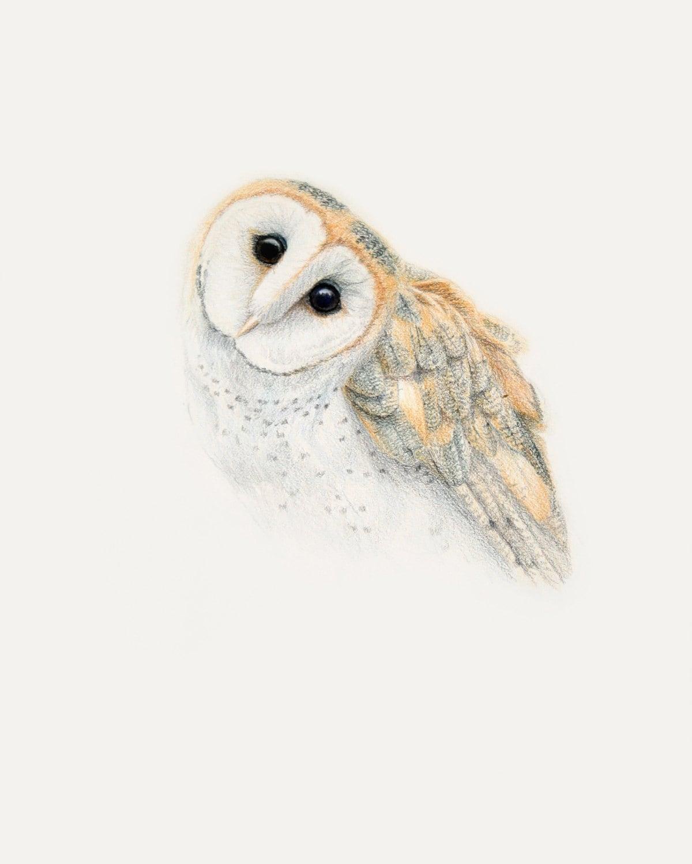 Owl Drawing Barn Owl PRINT Pencil Drawing: