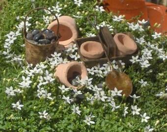 Fairy  Garden Meadow Ensemble Miniature garden Accessories