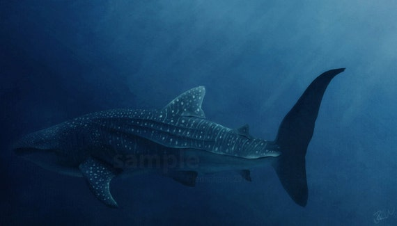 Whale shark - 15.5 x 9 print