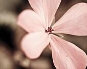 Dreamy Soft Pink Flower, Valentine, Love, Vintage, Fine Art Nature Photograph