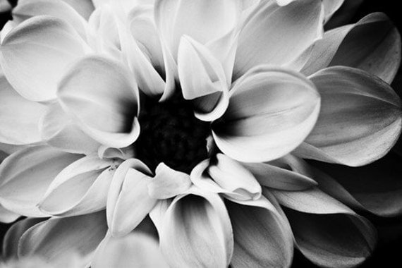 Dahlia, Black and White Lily, Flower Photography, Blossoms, Bloom, Dreamy Spring Lily, Soft, Lili, Fine Art Nature Photograph