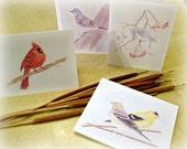 "Original Art Stationery... Wild Birds Variety Note Cards ""Backyard Birds"""