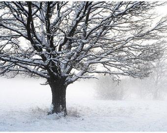 Winter Morning. Latvia.