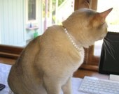 Classy Cat collar with freshwater pearls--Jeweled Horizons best seller