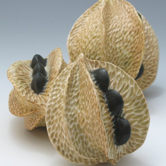 Porcelain pod in golden tan with black seeds