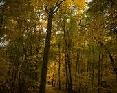 Yellow Leaf Road Path Green Fine Art Fall Foliage Photography