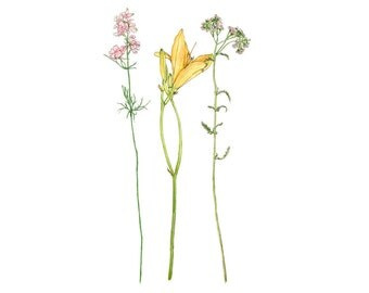 Tiger Lily, Pink Phlox and Yarrow, Watercolor Botanical Illustration, Art Print