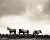 Ireland Photo - Wild as the Wind - Horses - Black and White - Countryside - Travel - Nature - Decor