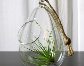 sitting or hanging hand blown glass plant globe terrarium