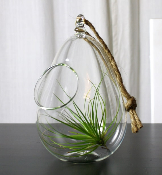 sitting or hanging hand blown glass plant globe terrarium