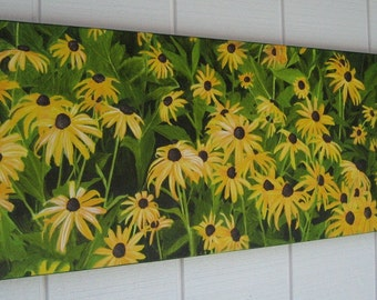 Field of Black-Eyed Susan's