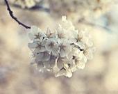 Cherry Blossoms Photography - Hazy Spring Dream - Dreamy Soft Pink Gray Cream Pastel Spring Cherry Blossoms Photography Nursery Art