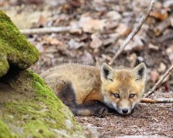 Fox Photography, Fox Print, Baby Fox Art, Wildlife Photography, Woodland Nursery, Woodland Decor, Fox Cub, Baby Animal Art, Nature Photo