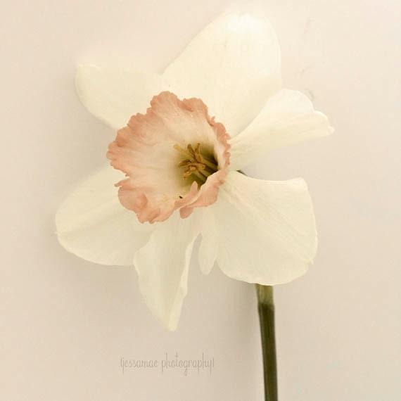 Flower Photography, Daffodil Art, Flower Print, White Flower Print, Beige Wall Art, Shabby Chic Flower Wall Art, Floral Print, Still Life