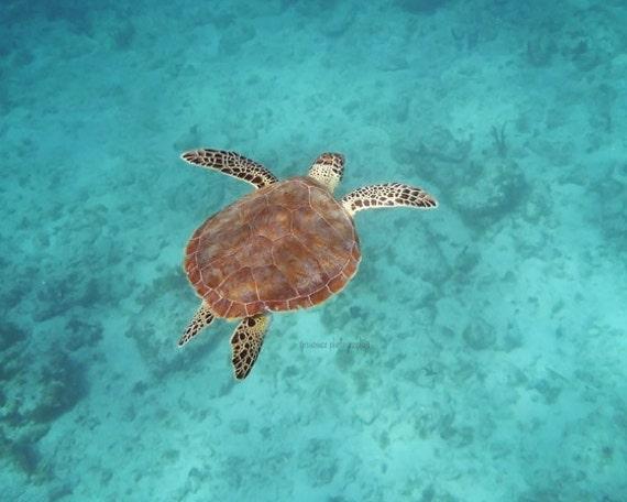 Sea Turtle Photography, Blue, Turquoise, Sea Animal Photography, Sea Turtle Print, Tropical, Sea Turtle Art, Ocean Life, Turtle Photography