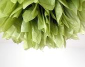 olive ... 1 Pom