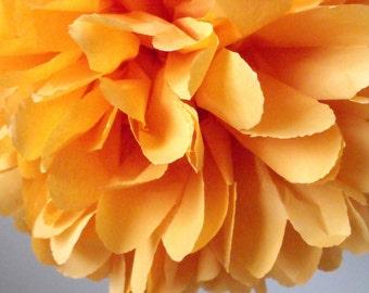Tangerine ... 1 Pom