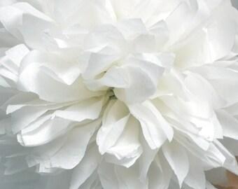 White ... 1 Pom