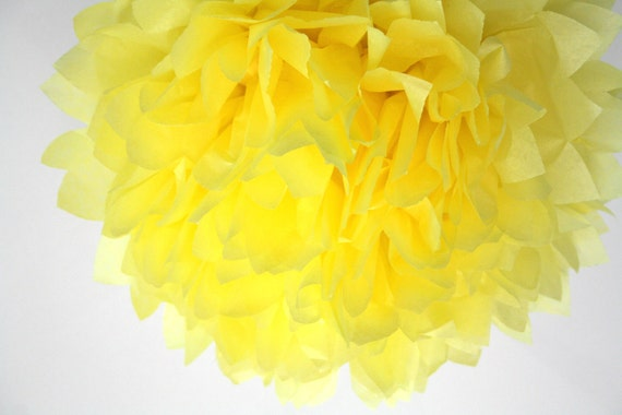 sunflower yellow  ... 1 Pom