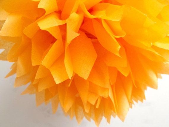 Apricot ... 1 Pom