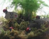 Ladybug Lane Terrarium