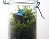 Mini Butterfly Terrarium