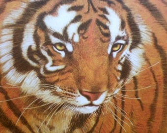 Bengal Tiger Print by Richard Hinger Beautifully Framed & Matted