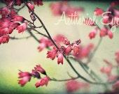 Tiny Tolls - Digital Download -coral bells, macro, red, fushia, grunge, garden, floral, botanical, nature photography