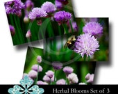 Herbal Blooms Royalty Free Images Set of 3 - Digital Download - fine art photos garden images