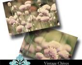 Vintage Chives Photography - Digital Download Set of 2