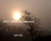 New Day - Morning Misty Sunrise - Digital JPEG File Emailed to you
