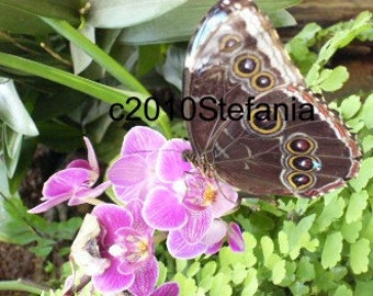 Brown Butterfly (outer wings of Blue butterfly)-Butterfly House - Montegrotto Italy-Digital JPEG File Emailed to you
