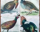 For Him, Vintage Game Birds