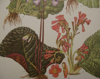 """Brightly colored PAIR, South African, Himalayan, & Chinese Large 9"""" by 12"""" Wildflower Prints, salmon orange, rose, lavender, deep greens"""