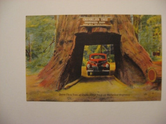 WEST coast colorful graphics, car, 1948 Vintage postcard Redwood Highway Underwood Park California