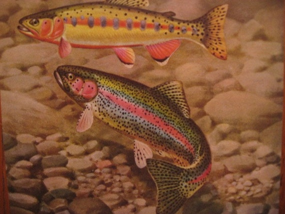Fly Fisherman Fly Trio Of Vintage Fishing Prints By Seasearider