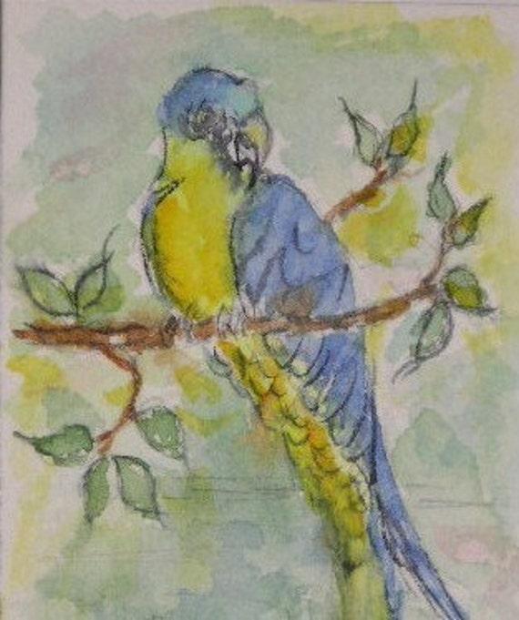 Blue Parrot ACEO Original Watercolor by Carla Garloff
