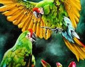 Military Macaws art print