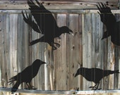 STENCILS for Walls - 4 CROWS - Reusable large bird stencils (4pc kit)