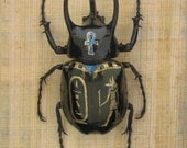 Anubis - hand painted and framed beetle